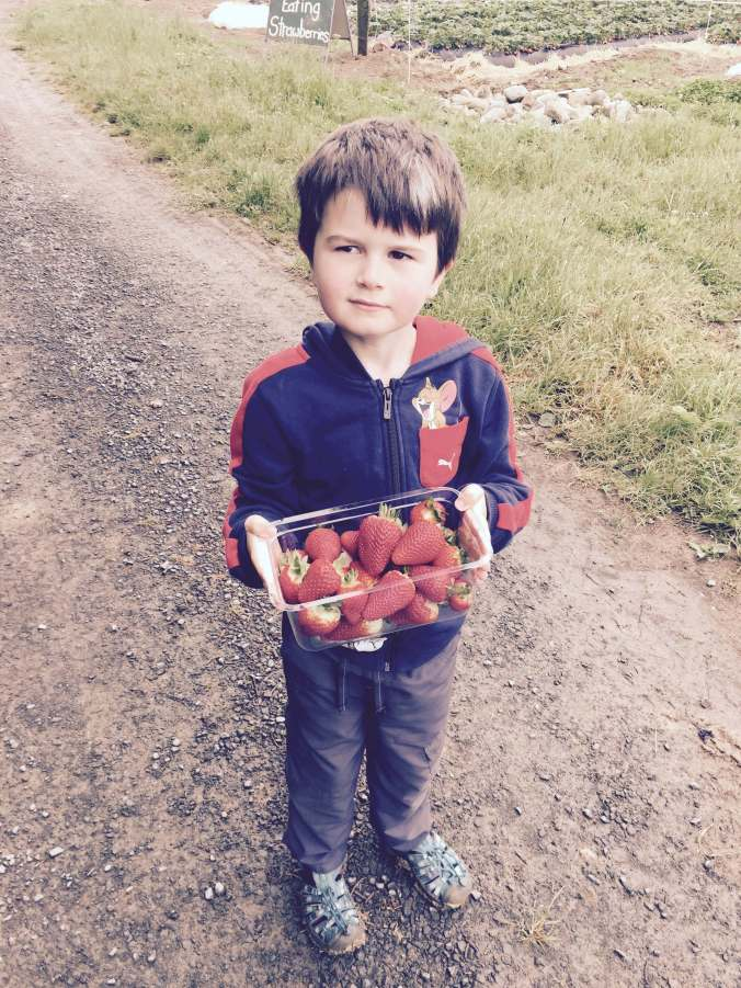 StrawberryPicker